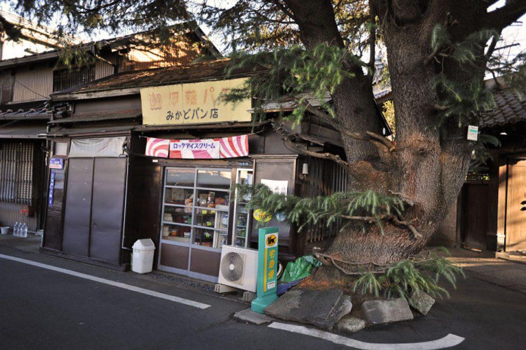 Der alte Zedernbaum an der Mikado Bäckerei in Yanaka; Foto: Tokyobling